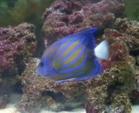 Marine fish for sale
