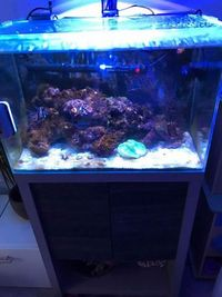 fluval M60 - UNbelievable VALUE - Complete setup with livestock