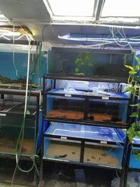 BARGAIN Custom made FISH TANK RACKING SYSTEMS FOR SALE.