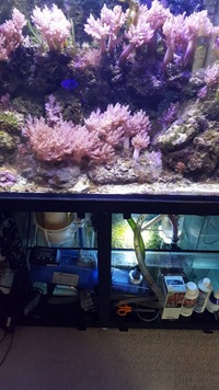 About 80kg live rock & corals in full setup