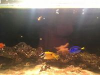 Beautiful 350l tank worth over �0