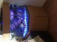 for sale up and running marine tank �0