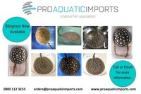 PROAQUATIC IMPORTS - SPECIALIST IN THE IMPORTING AND WHOLESALE OF AQUATIC LIVESTOCK
