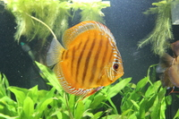 7 Alenquer and 2 Sanmerah Discus �0.00
