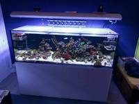 Aquarium Connections Marine Tank 750 litre, opti-white glass, rimless
