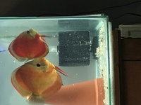 Number of discus for sale open to offers
