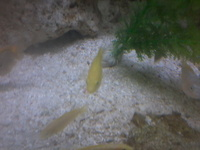 fish for sale �each