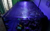 Simply Aquaria DIY Aquarium Tank Cover