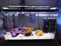 Marine Aquarium Full Set Up With Coral