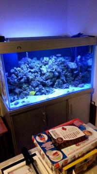 Live rock, Live sand, in Marine fish tank