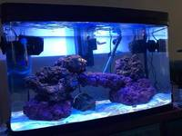 120L Interpet Aquarium with Power Filter- 3 weeks old