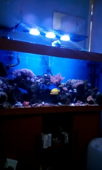 Selling jewel 4ft marine aquarium complete with fish ect