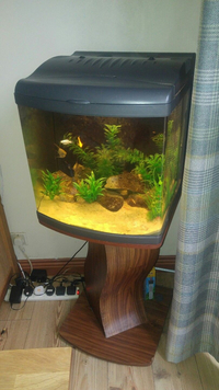 Manchester M45 Feb 2018 Update WEISNICK AQUARIUMS Great chance to get a bargain. Over 60 pre-owned, tanks plus loads of accessories. From £3 upwards. Viewings welcome Manchester M45