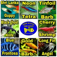 Tropical fish stock list