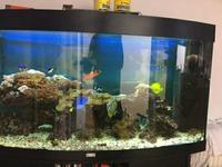 SPECIAL OFFER FOR QUICK SALE 260L Marine tank equipment fish, rocks, ect