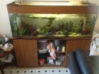 large fish tank n unit n extras 250.00 ono
