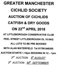 Greater Manchester Cichlid Society Auction 22nd April
