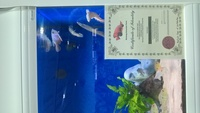 World of Water Bicester Tropical Fish Stocklist
