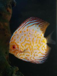 Various Large Discus