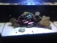 Marine Livestock in Reef tank and all equipment included fully stocked.