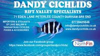 DANDY CICHLIDS NEXT IMPORT 19th May 2018