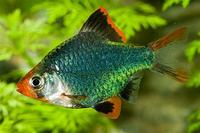QUALITY TROPICAL FISH NEWPORT WALES