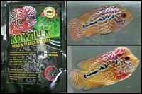 Kokzilla flowerhorn and big cichlid food