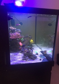 MARINE FISH IN COMPLETE SET UP - RED SEA 550