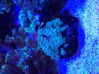 SPS,LPS and soft corals for sales