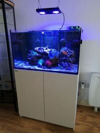 Red Sea Reefer 250 with extras and life stock