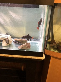 Steal of a Deal absolute bargain Tropical Fish aquarium 225 ltr tank and bespoke stand for sale with fish