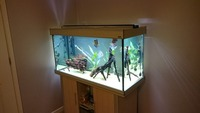 ####SOLD#### Aqua One 300 litre full Tropical Freshwater set up for sale �0 ono