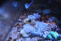 Pulsing Xenia frags � /></a><br><br><a class=