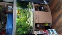 450 litre, corner cichlid aquarium full set up inc fish �0 ono