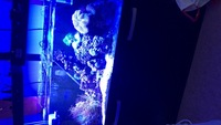 Full 3ft marine setup, fish, coral, lights etc NEED GONE THIS WEEK