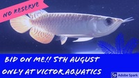 Massive Fishkeeping Event, 50% OFF, No Reserve Auctions