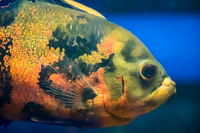 Aquatic Finatic – Stock List & Offers -