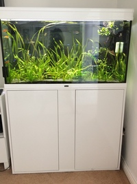 Complete Tropical fish aquarium fish tank set up with live plants and fish