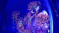 anemones and nice leather coral