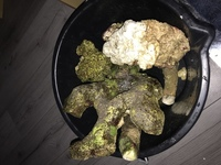 REDUCED to � Marine tank - live rock for Sale 9kg