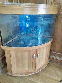 Large selection of Tropical fish equipment and Fish for Sale
