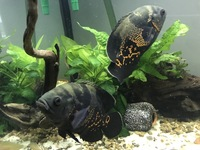 Tropical fish for sale. bargain �