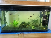 Coldwater and temperate fish for sale