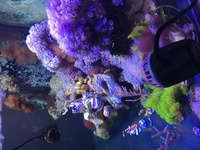 Pulsing Xenia FREE and vortex equipment for sale