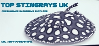 Top Stingrays UK