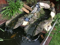 Over 20 Koi for sale plus pump/waterfall and more