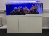 marine tank and set up for sale including all corals and fish