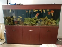 Almost new fish tank marine and tropical compatible 6.5x3x2 ft
