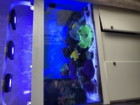 Marine fish, Corals, Live rock in Full marine set up �00 Ono