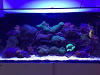 Marine corals, fishes and live rock for sale